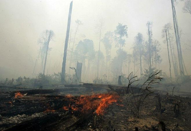Khung cảnh hoang tàn sau một vụ cháy rừng nghiêm trọng.