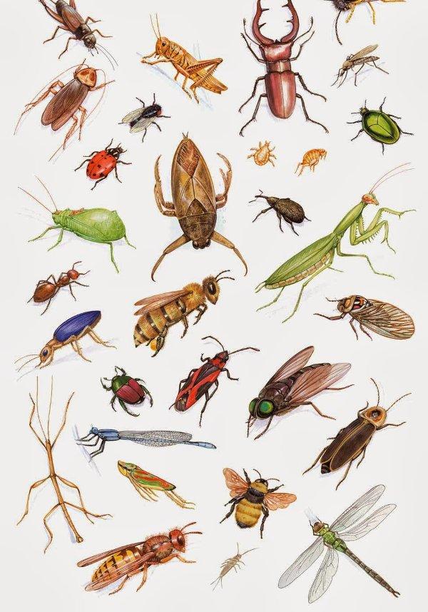 Cháy rừng ở các khu vực từng trải qua nạn côn trùng sẽ có mức độ nghiêm trọng thấp hơn đáng kể so với các khu vực rừng thông thường.