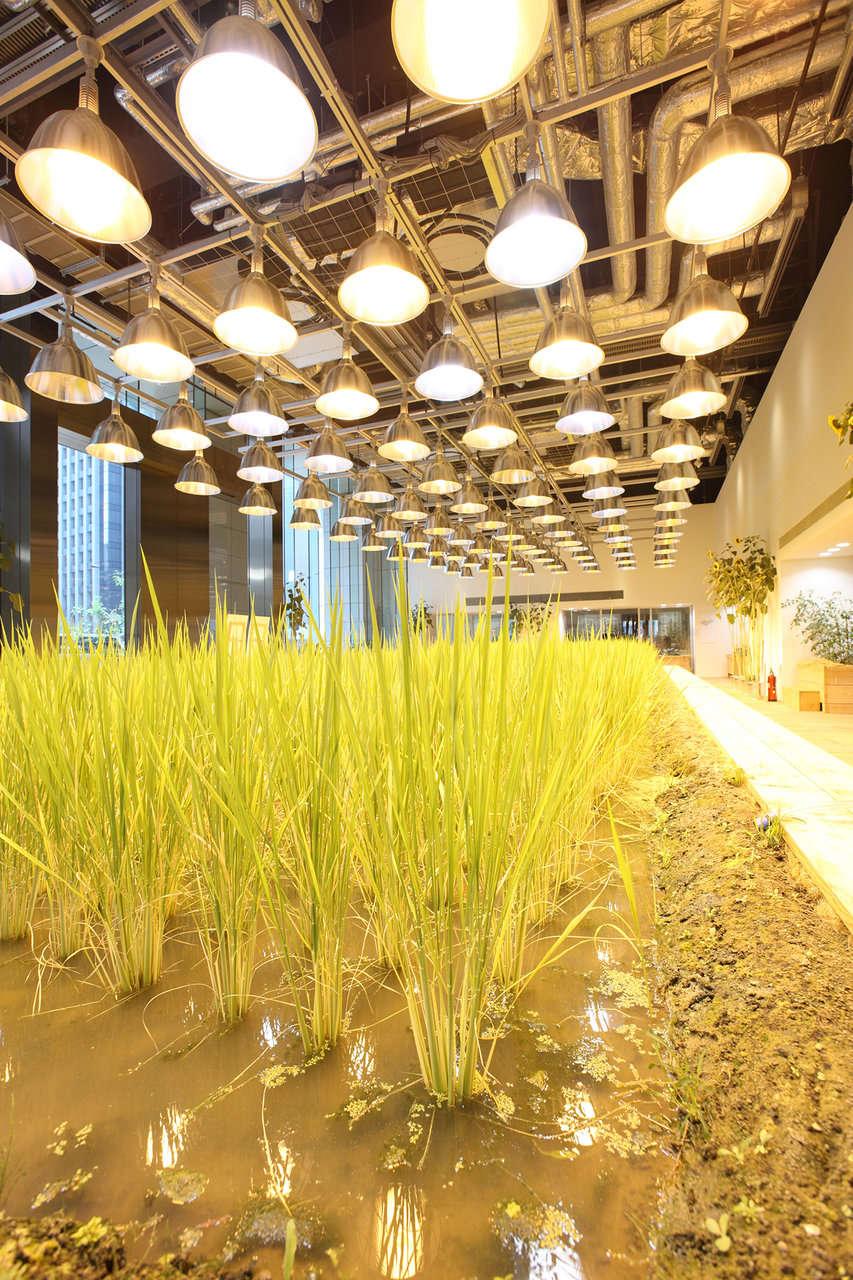 Tòa nhà có tổng diện tích 20.000 m2, trong đó 4.000 m2 được sử dụng để trồng 200 loại cây khác nhau như lúa, rau, cây ăn quả...
