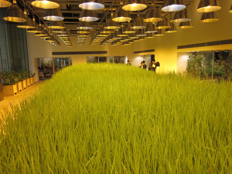 Tất cả số lương thực, thực phẩm được thu hoạch sẽ phục vụ cho các bữa ăn của những người làm việc trong tòa nhà.