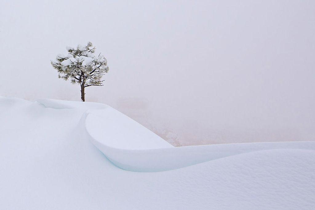 Cây xanh duy nhất xuất hiện trên lớp tuyết dày bao phủ khu vực Bryce Canyon