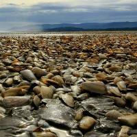 Ngao chết hàng loạt phủ kín bãi biển Chile