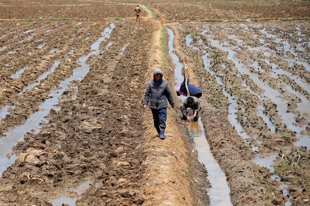 Người nông dân lao động trên một cánh đồng ở ngoại ô Bình Nhưỡng ngày 4/5.