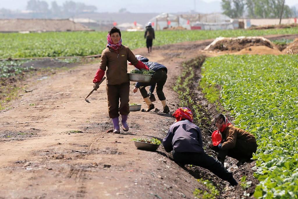 Phần lớn các hoạt động sản xuất lương thực của Triều Tiên đều dựa vào sức lao động của con người.