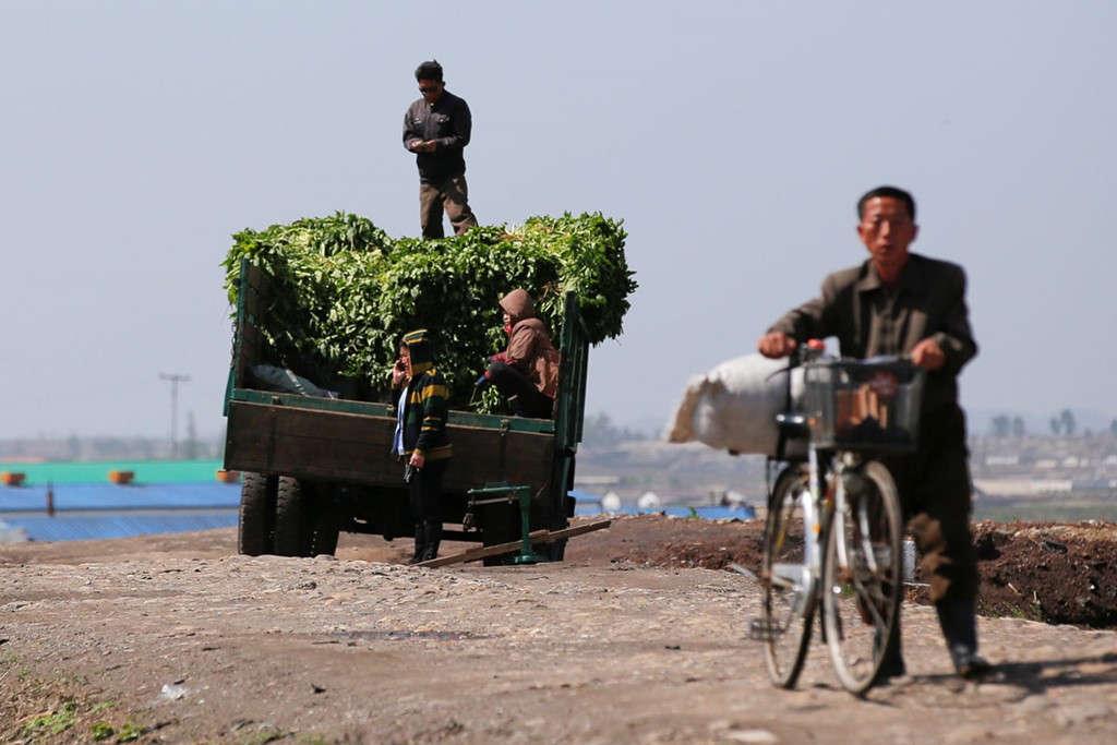 Trong nỗ lực đảm bảo an ninh lương thực, Triều Tiên đang phát triển một vài nông trang điển hình, với trang thiết bị hiện đại. Tuy nhiên, phần lớn người dân Triều Tiên vẫn phải dựa vào nguồn lương thực từ các thửa ruộng thông thường.