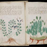 Bí ẩn cuốn sách Voynich
