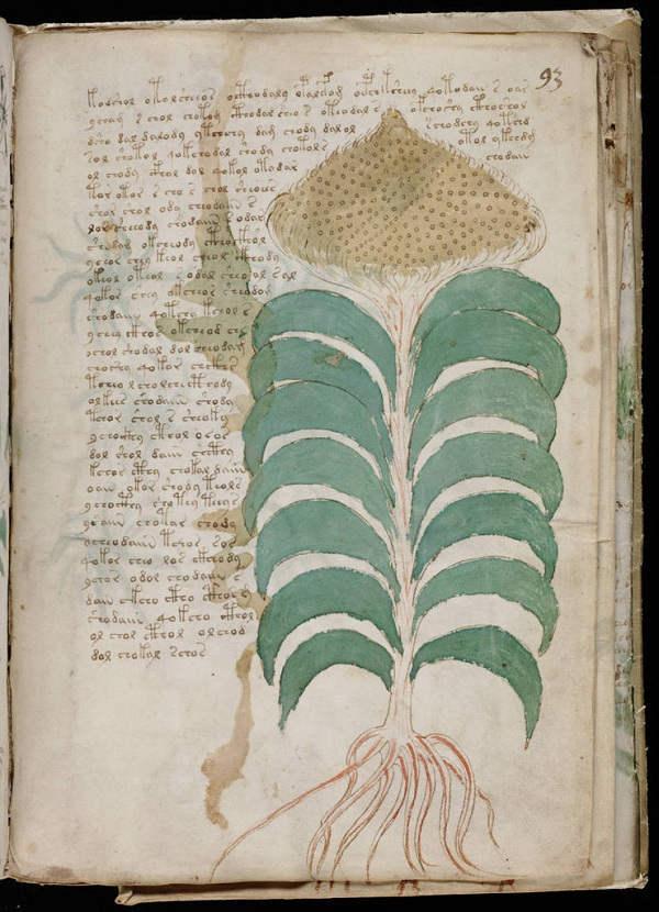 Những hình ảnh về sinh vật trong bản thảo