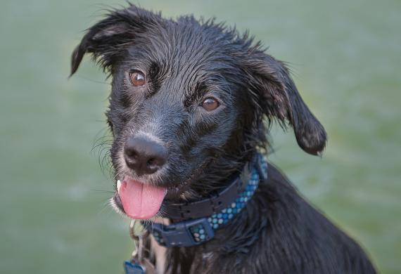 Nước từ vòi cũng có thể có mùi như lông chó ướt.