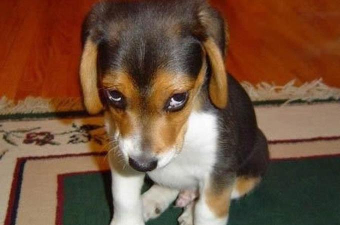 """Loài chó rất biết cách """"cư xử"""" để không bị con người trút giận."""