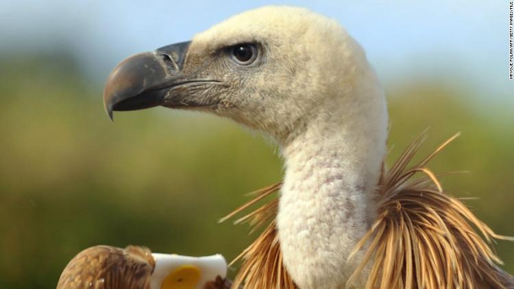 Sự biến mất của những động vật xấu xí này sẽ gây ra thảm họa cho con người và tự nhiên.