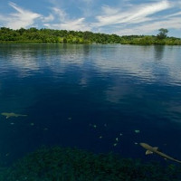 Biến đổi khí hậu đã nhấn chìm 5 đảo trên Thái Bình Dương