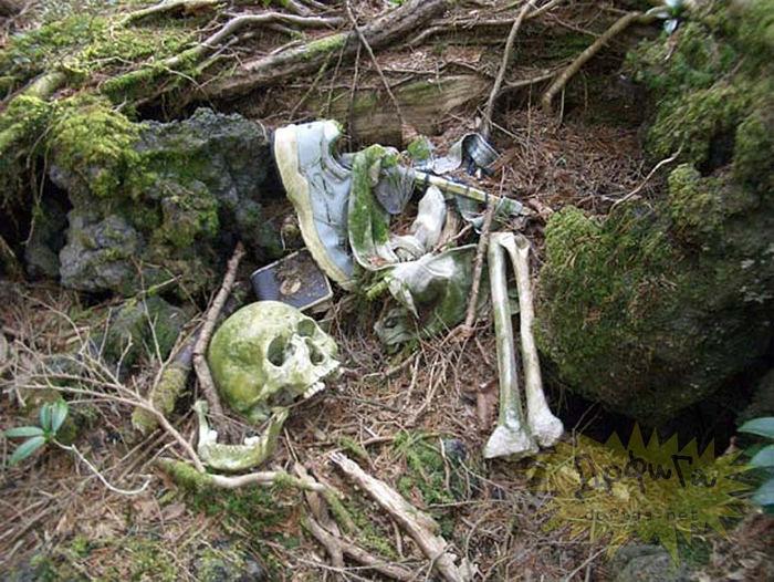 Nhiều người chọn khu rừng này làm nơi kết thúc cuộc đời mình