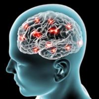 Phát hiện chấn động về nhớ và phản trí nhớ