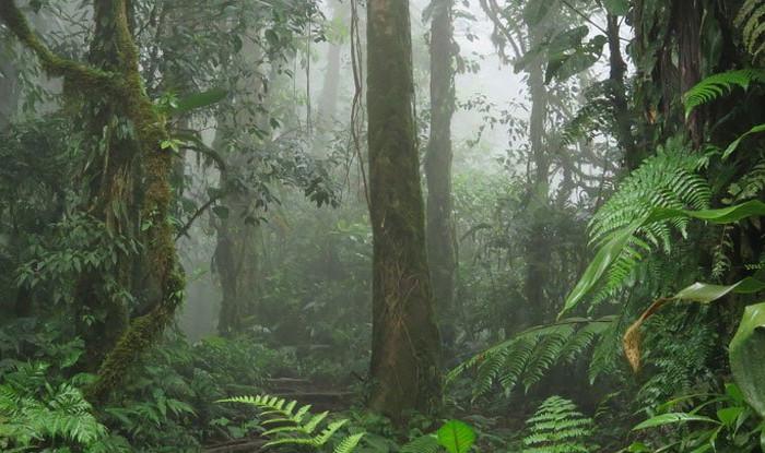 Nguyên nhân khiến cây cối bị hủy diệt một phần nằm ở biến đổi khí hậu.