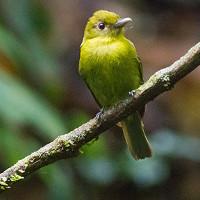 Chim cũng quan hệ đồng giới và hợp tác nuôi con
