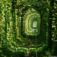 """Câu chuyện thú vị về """"đường hầm Tình yêu"""" ở Ukraine"""