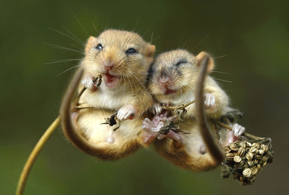 Trong hình là những chú chuột hạnh phúc nhất hành tinh
