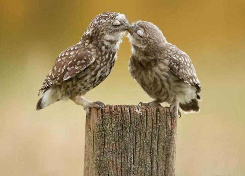 Trao nụ hôn mãnh liệt vào buổi sáng