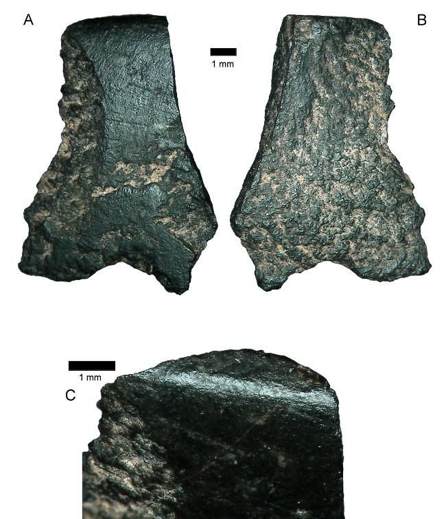 Mảnh rìu đá bazal dài 11mm được các nhà khoa học cho biết là mảnh vỡ của chiếc rìu được làm bằng tay cổ xưa nhất.