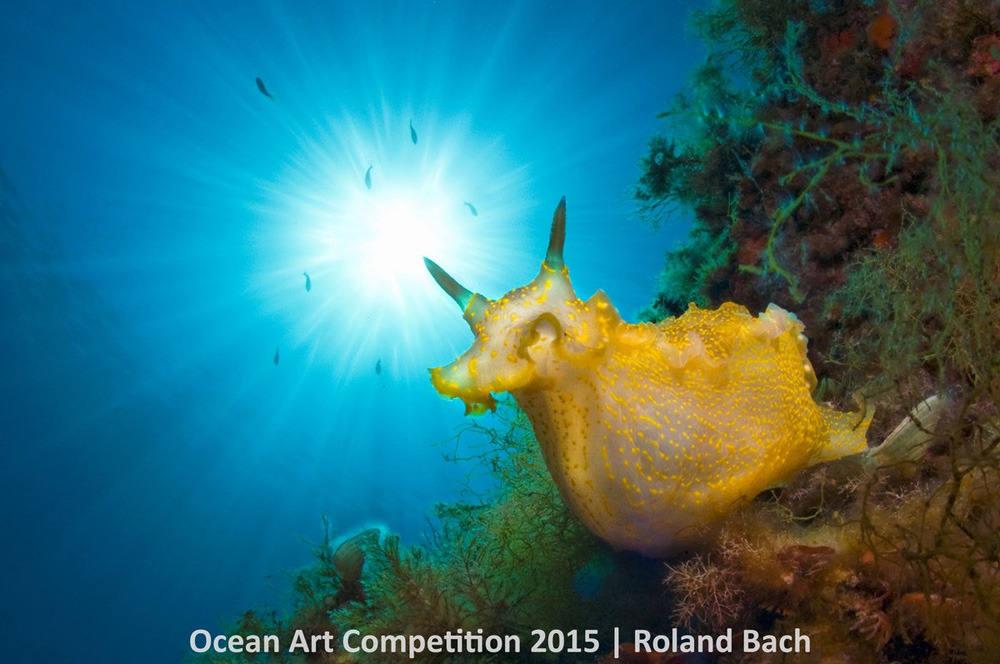 Con ốc sên biển rực rỡ sắc màu có tên khoa học là Felimare picta đang nghỉ ngơi trên bờ biển phía Bắc đảo Balearic Minorca thuộc Punta den Siulet.