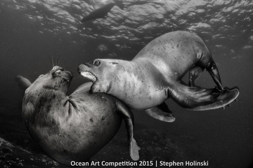 Hai con sư tử biển con đang nghịch ngợm đùa giỡn gần đảo Hornby, British Columbia, Canada.