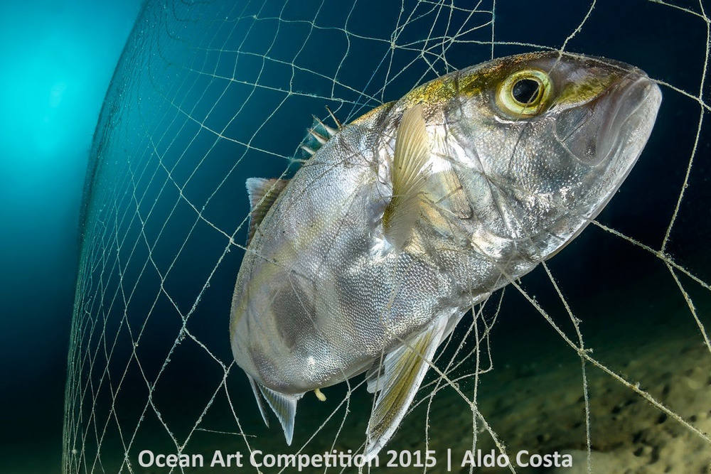 Con cá này đã bị bẫy bởi chiếc lưới đánh cá.