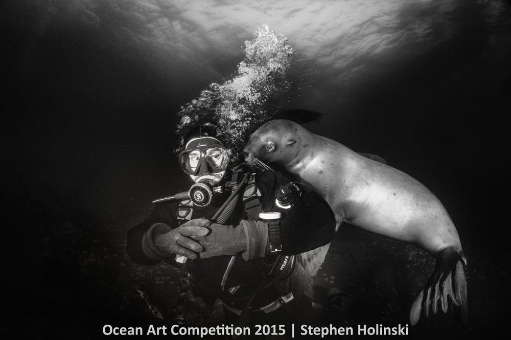 Chú sư tử biển con hiếu kỳ ôm đùa giỡn nhiếp ảnh gia Stephen Holinski trước khi bơi về phía đảo Hornby ở Canada.