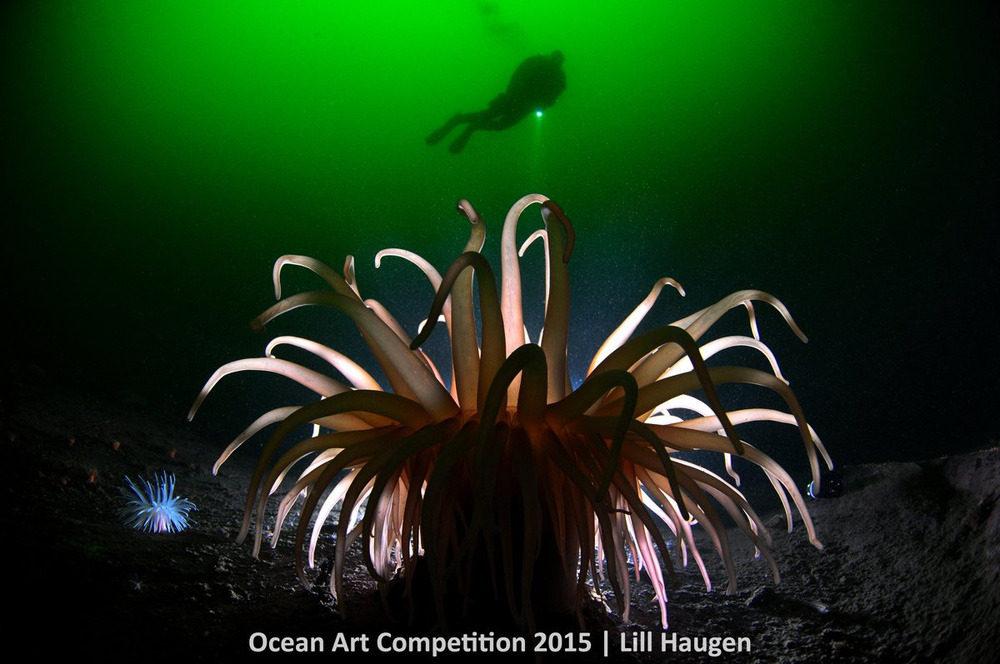 Hải quỳ deeplet đang bám chặt dưới đáy vùng nước băng giá ở Vịnh hẹp Oslo, Na-uy