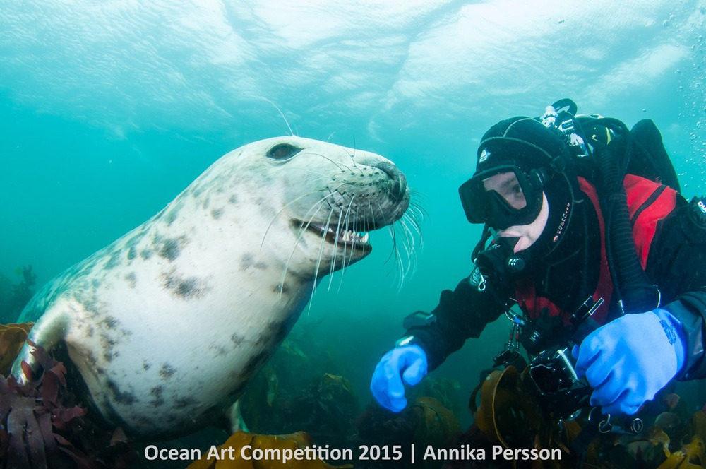 Chú hải cẩu xám tinh nghịch nở nụ cười với một thợ lặn phía xa đảo Farnes, vương quốc Anh.