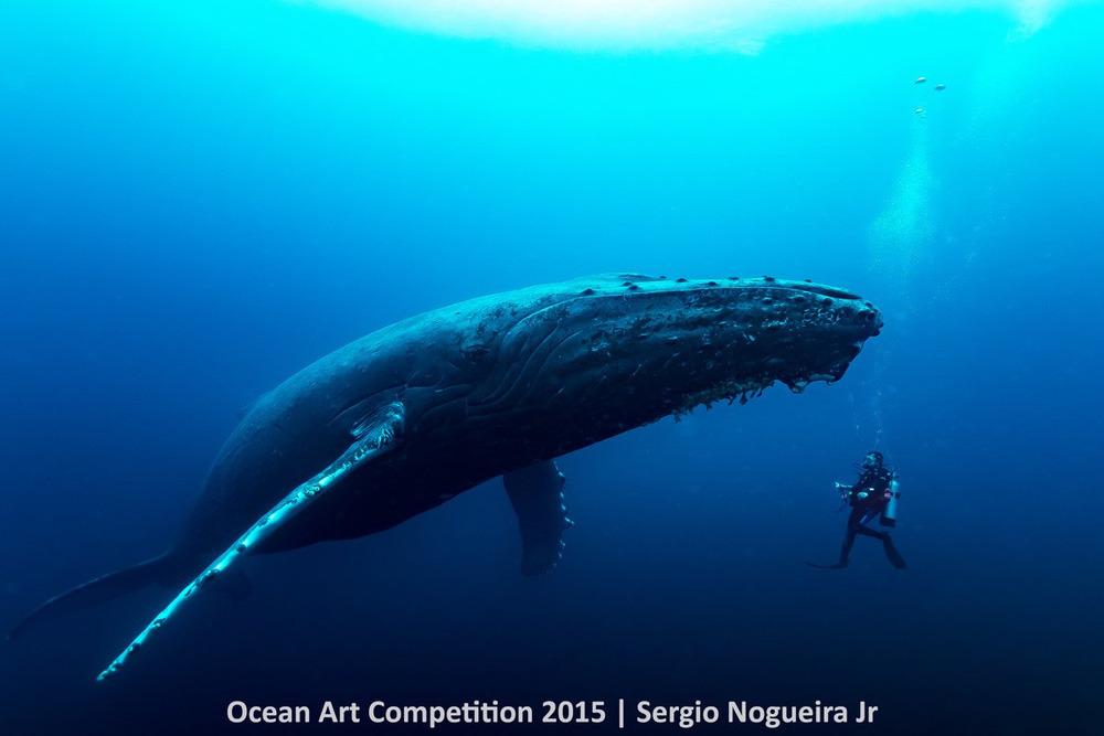 Ảnh chụp cá voi lưng gù đang xích lại gần thợ lặn Gustavo Verzoni chỉ 24 tiếng đồng hồ sau khi đứa con của nó bị đôi cá kình ăn thịt.