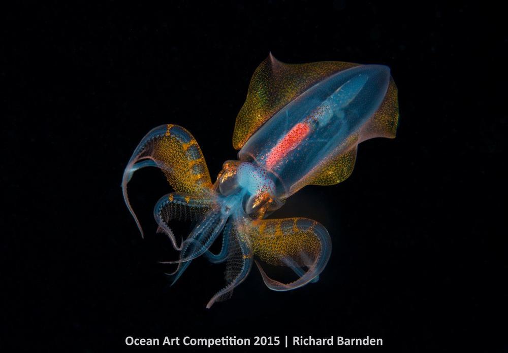 Con mực rực rỡ sắc màu có hình dáng giống người ngoài hành tinh ở vùng nước tối thuộc Palau.