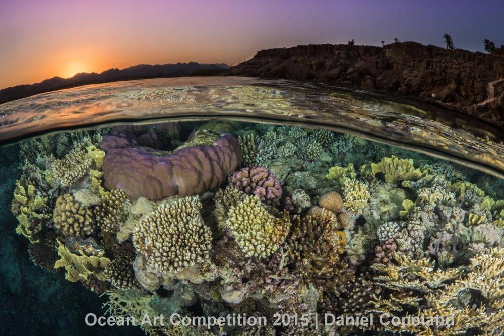 Nhiếp ảnh gia Daniel Copeland đã kiên nhẫn chờ một tiếng đồng hồ để chụp lại khoảnh khắc phân tách của rạn san hô ở công viên quốc gia Ras Mohammed, phần Biển Đỏ thuộc lãnh thổ Ai Cập.
