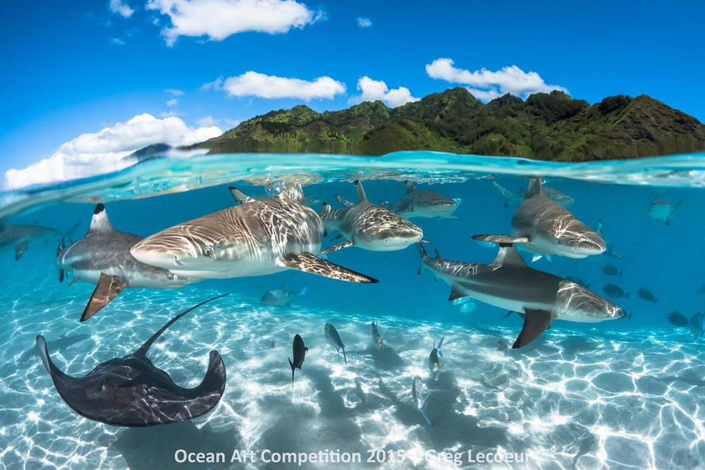 Cá mập đầu đen và cá đuối đang tập hợp thành từng bầy ở vùng nước Moorea, French Polynesia.