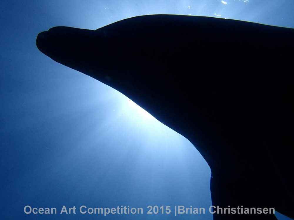 Nhiếp ảnh gia Brian Christiansen đã chụp bóng nghiêng của một con cá heo khi đang bơi theo đàn ở Deshaies, Guadeloupe.