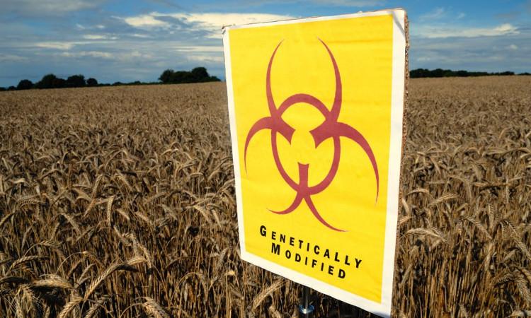 Dư luận vẫn còn nhiều nghi ngại về mức độ an toàn cũng như ảnh hưởng của cây trồng biến đổi gene đối với môi trường và sức khỏe của con người.