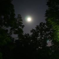 """Bằng chứng cho thấy cây cối cũng biết """"đi ngủ"""" giống như con người"""