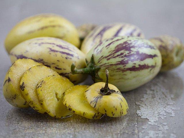 Mỗi cây dưa pepino có thể cho từ 80 - 120 quả/vụ.