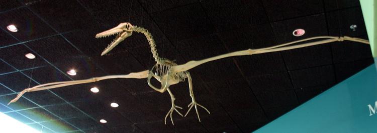 Mẫu vật của loài chim pelagornithid.
