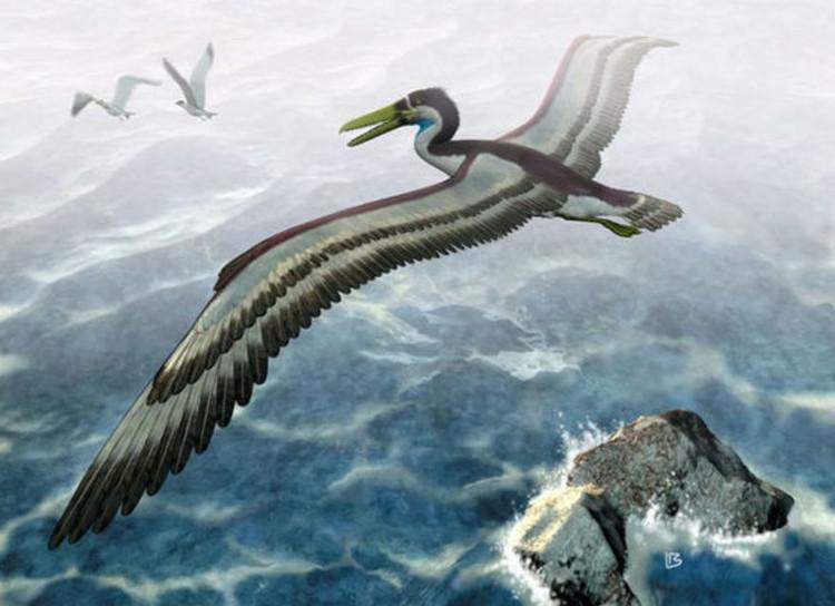 Ảnh minh họa về loài chim khổng lồ pelagornithid.
