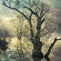 Cảnh thần tiên phản chiếu trên mặt nước ở Hàn Quốc