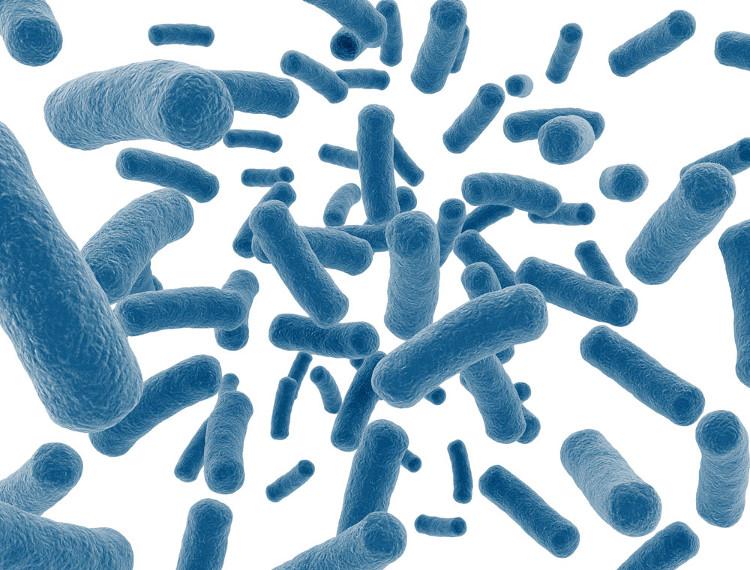 Sợi bông vải có trong rốn sẽ có thể đóng vai trò như một dụng cụ hút vi khuẩn.