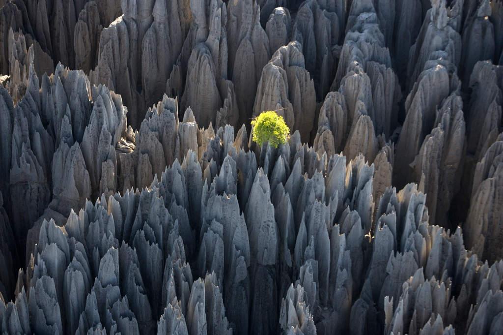 Rừng núi đá ở Madagascar