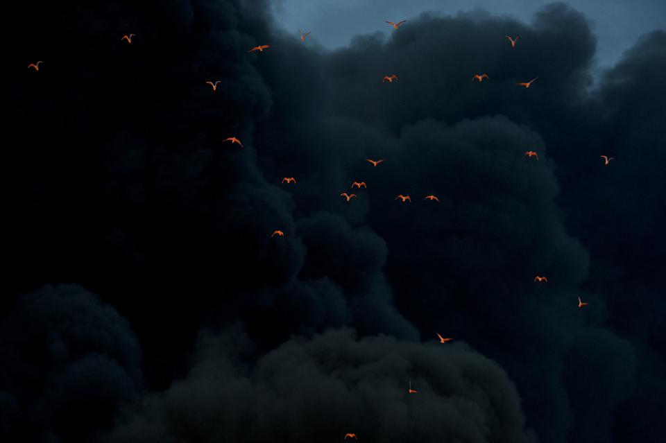 Bạn nghĩ đó là những con chim lửa ư? Không đâu, chỉ là ánh sáng phản xạ vào chúng thôi