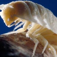 Phát hiện hang động kỳ bí sau 5,5 triệu năm, tìm thấy hàng chục loài sinh vật mới