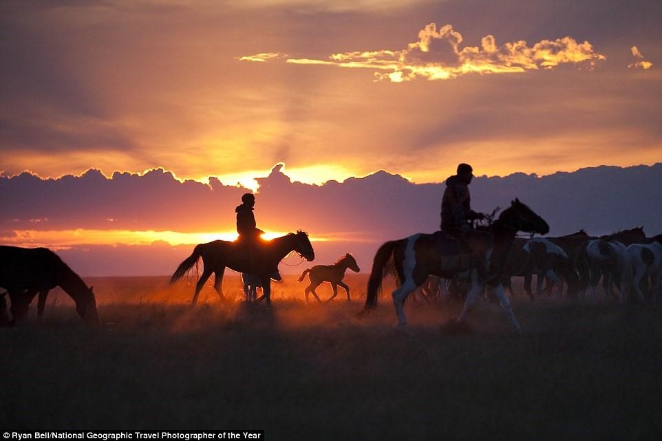Ở vùng Pavlodar, Kazakhstan, những người chăn thả lùa đàn gia súc và nơi nghỉ đêm.