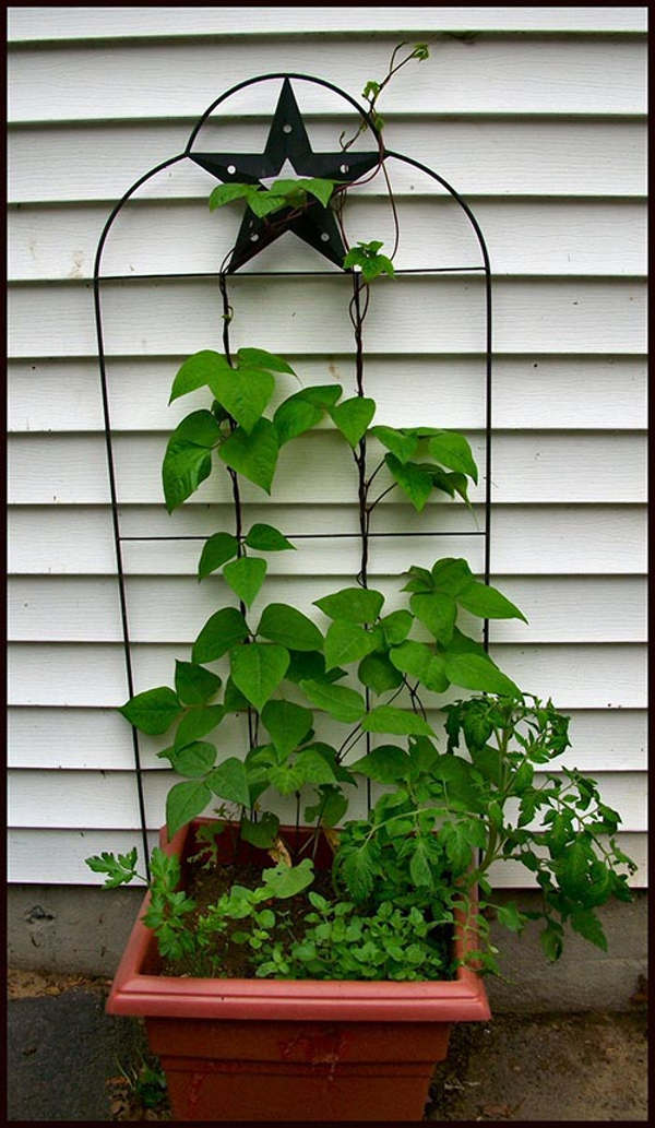 Làm giàn trồng đậu đũa