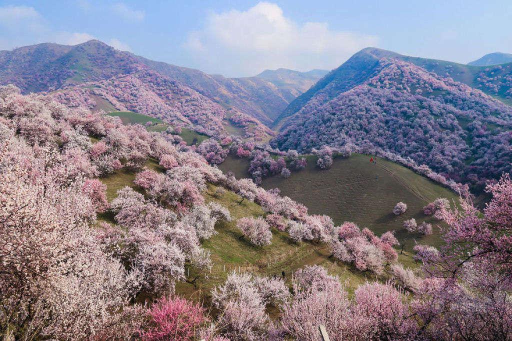 """Nổi danh với tên gọi """"Giang Nam phía bắc Vạn Lý Trường Thành"""", Y Ly là một trong những địa điểm đẹp tuyệt vời của vùng Tân Cương."""
