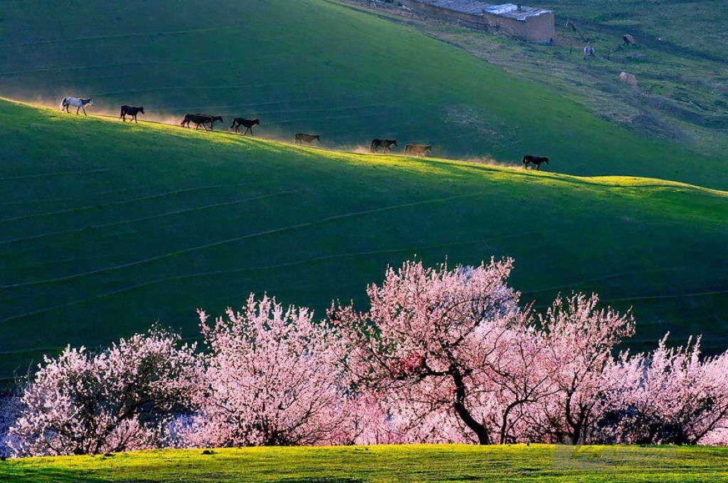 Thung lũng hoa mai không chỉ thỏa mãn mắt nhìn mà còn là địa điểm lý tưởng để chụp hình, đặc biệt khi mặt trời mọc và lặn.