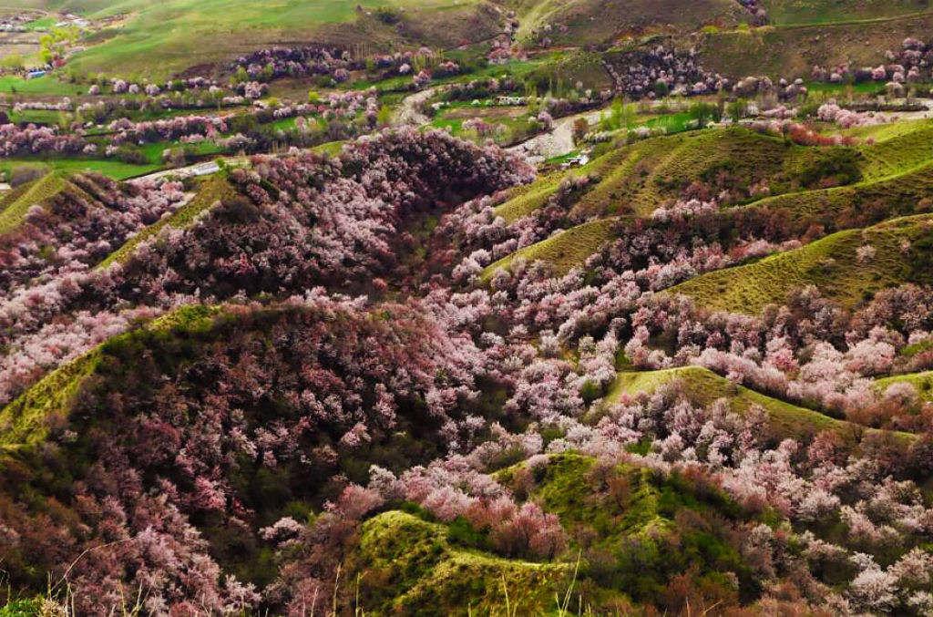 Khi đặt chân tới đây, du khách sẽ bị hút hồn bởi một bức tranh sắc màu tươi tắn, sắc hồng, sắc trắng của những cánh hoa hòa quyện với thảm cỏ mượt mà.