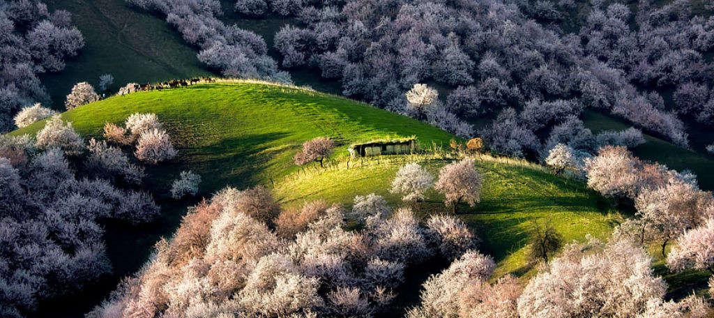 Điểm đẹp nhất của Y Ly chính là thung lũng hoa mai.